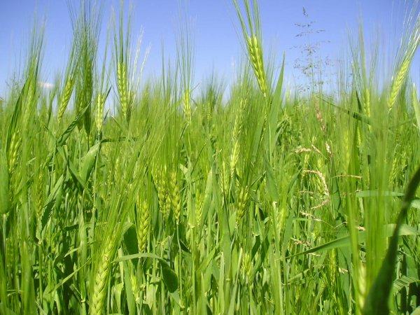 Мрежи за балиране на сено